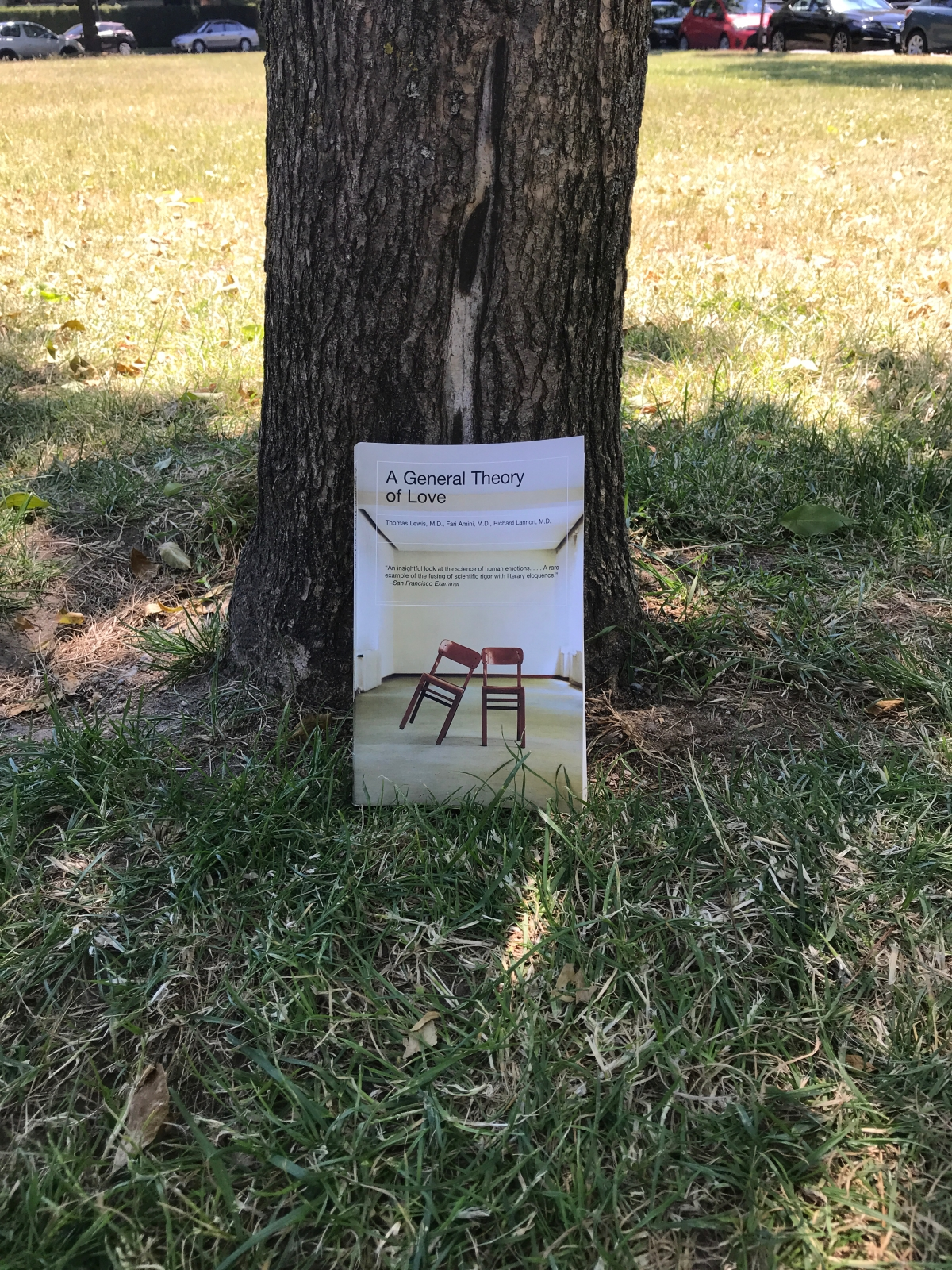 I Read a Book Under A TreeToday